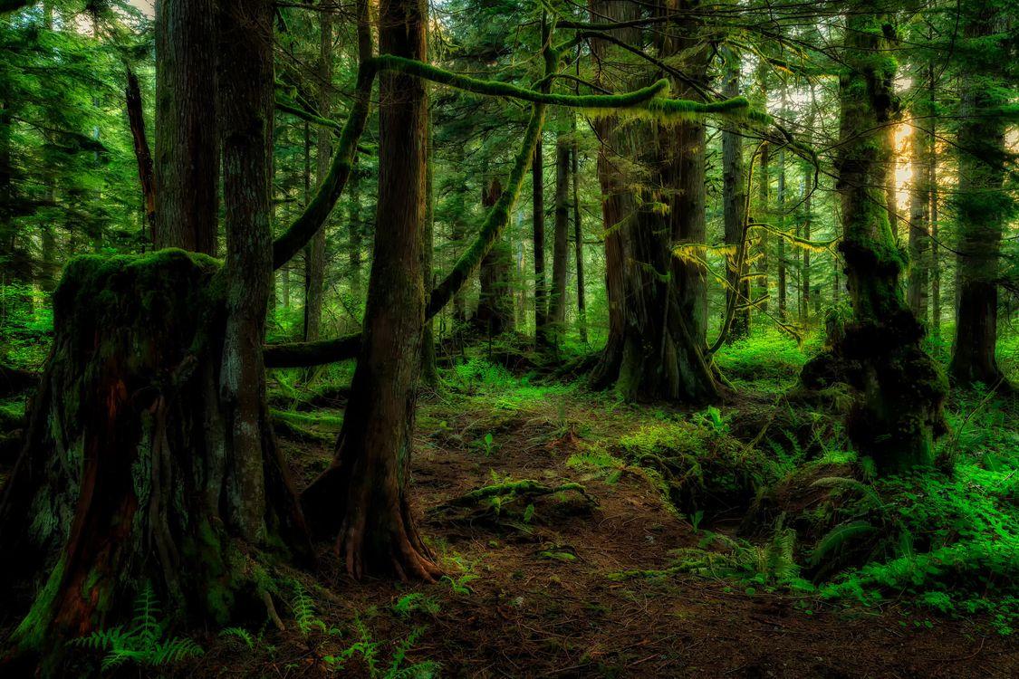 Фото бесплатно закат, лес, деревья - на рабочий стол