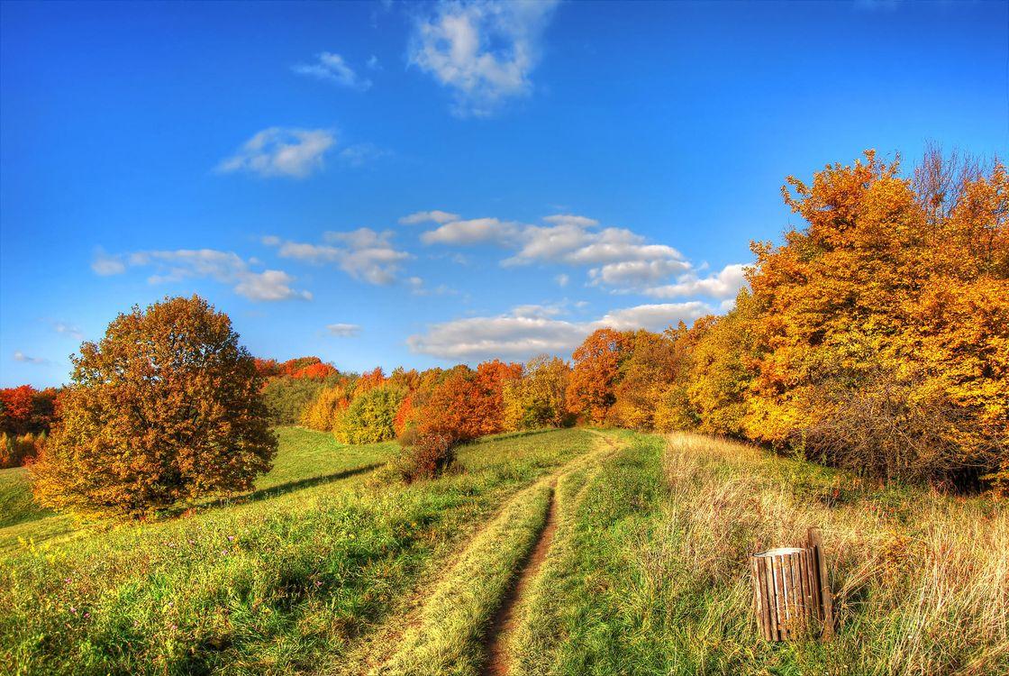 Фото бесплатно осень, поле, дорога, деревья, пейзаж, пейзажи