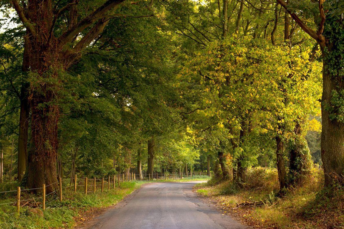 Обои осень, парк, дорога картинки на телефон