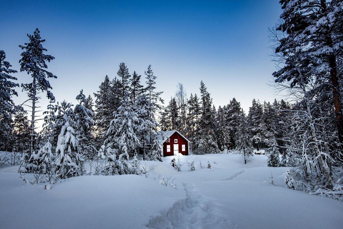 Фото бесплатно зима, снег, сугробы, лес, деревья, домик, пейзаж, пейзажи