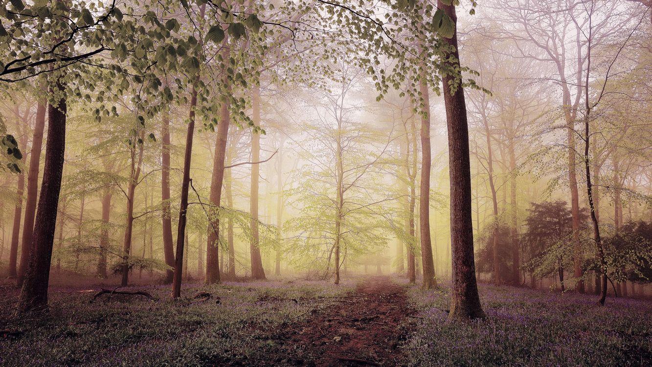 Фото бесплатно лес, деревья, тропинка, природа, туман, пейзаж, природа