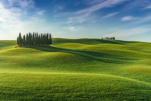 Фото бесплатно пейзаж, деревья, холмы