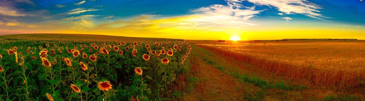 Photo free landscape, field, ears of corn