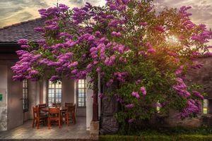 Фото бесплатно Замок Ленцбург, Schloss Lenzburg, Швейцария, закат, дерево, цветы, здание, стена, интерьер, пейзаж