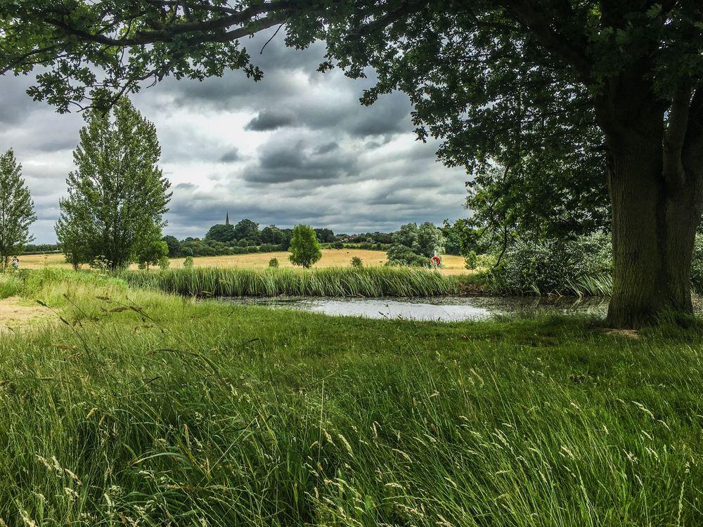 Фото бесплатно поле, пруд, трава, деревья, пейзаж, пейзажи