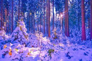 Фото бесплатно зима, лес, снег, деревья, сугробы, пейзаж