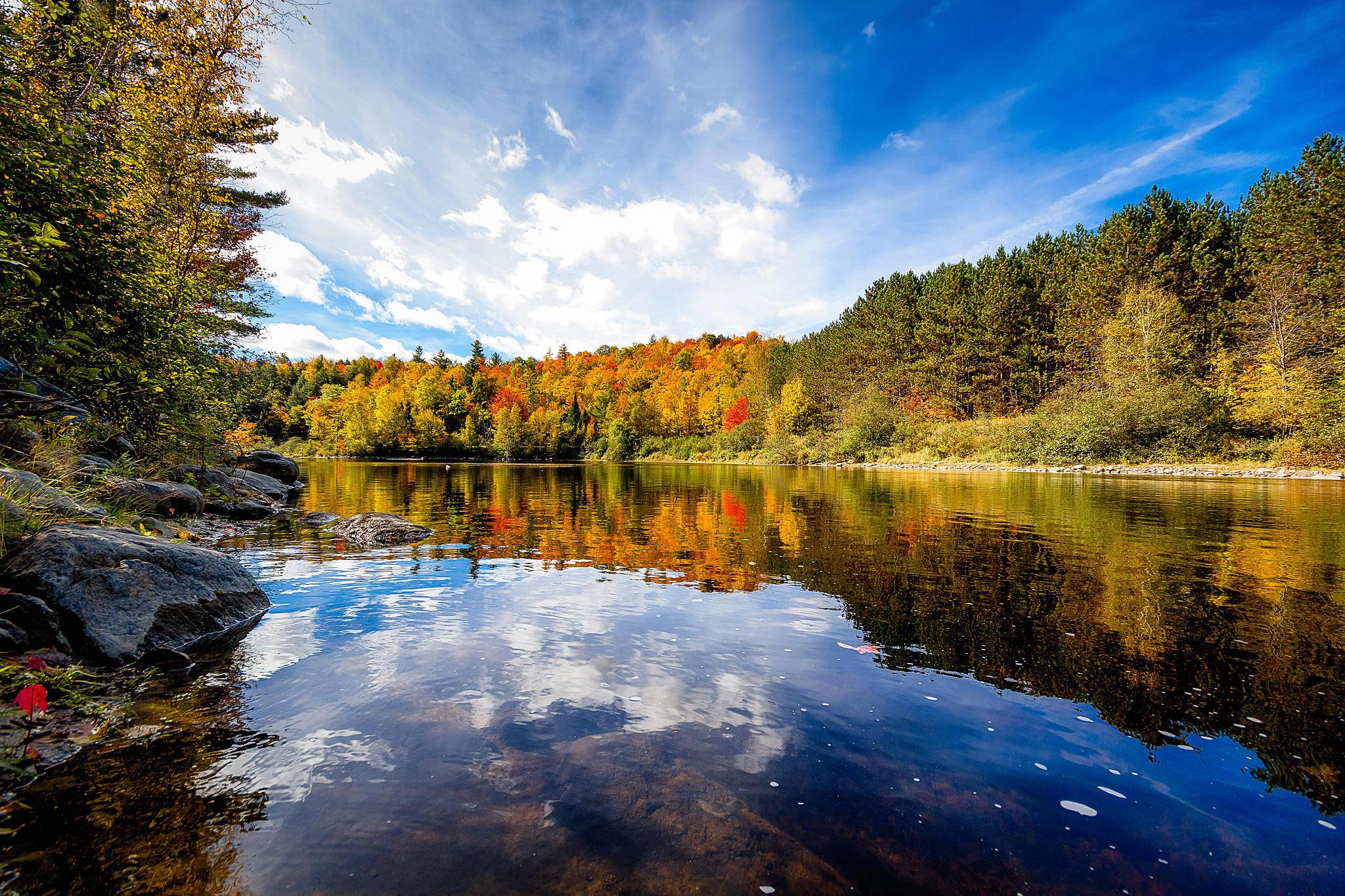 Обои осень, лес, деревья, река