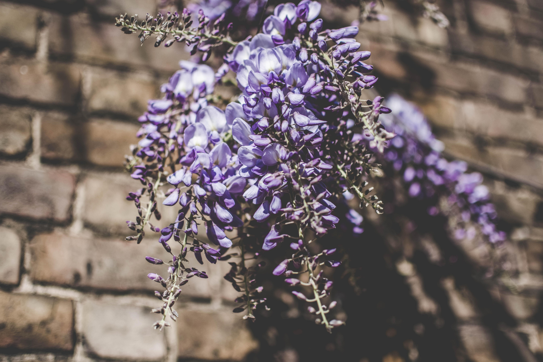 обои цветок, лепестки, веточки, бутоны картинки фото
