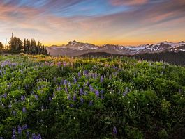 Бесплатные фото закат,горы,поле,цветы,пейзаж