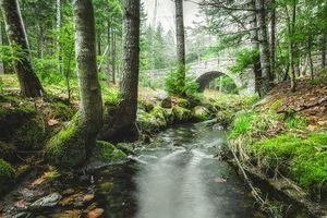 Обои Каменный мост, Национальный парк Акадия, штат Мэн, река, лес, деревья, пейзаж