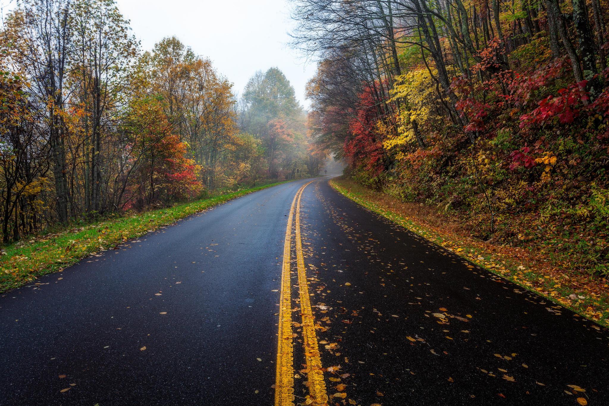 Осенняя дорога бесплатно