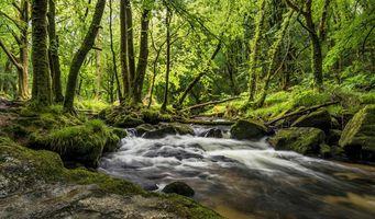 Заставки лес,деревья,река,камни,пейзаж