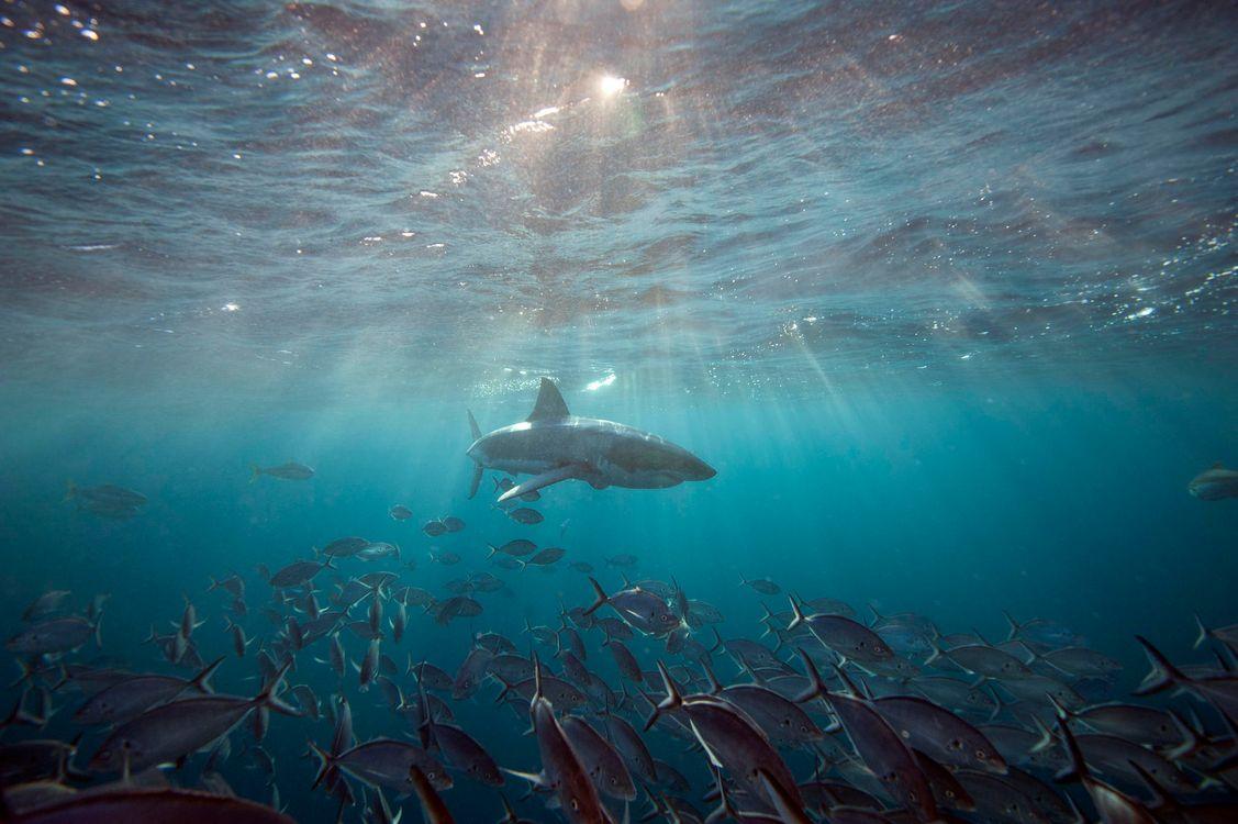 всех рецептах ледовитый океан под водой фото неё