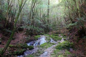 Бесплатные фото лес,деревья,водопад,речка,ручей,природа