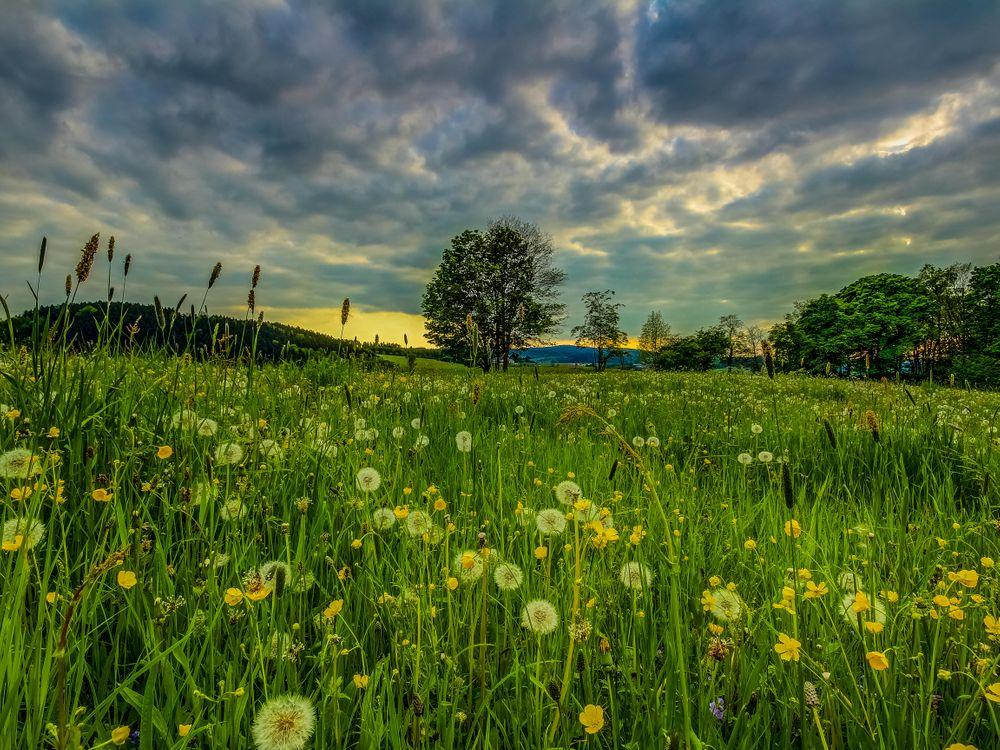 Фото бесплатно поле, трава, цветы, закат, деревья, пейзаж, пейзажи - скачать на рабочий стол