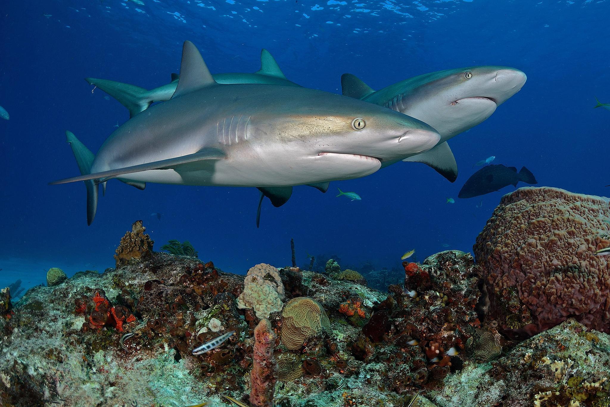картинки обои для стен море акул даже все