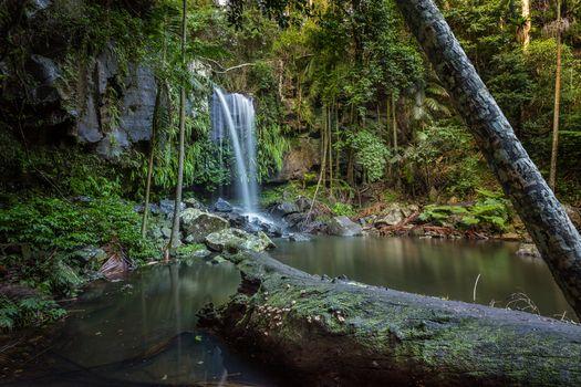 Curtis Falls Mt Tamborine, Queensland, Национальный парк Тамборин, водопад, лес