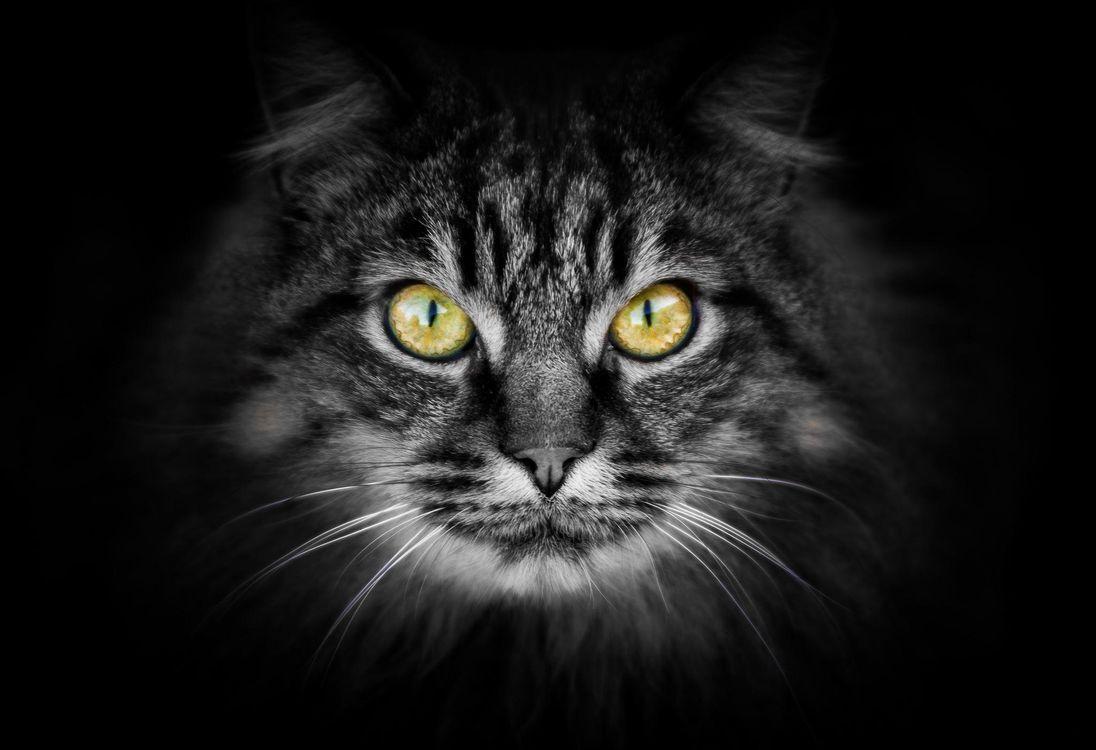 Фото бесплатно животное, черный фон, лицо - на рабочий стол