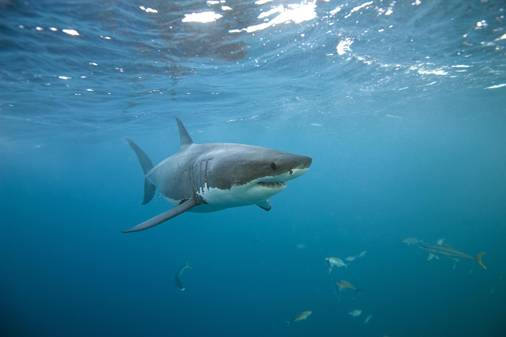 картинки обои для стен море акул работе использую молитвы