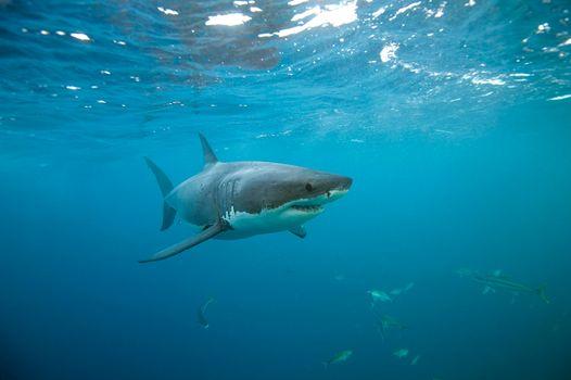 Фото бесплатно море, вода, акулы