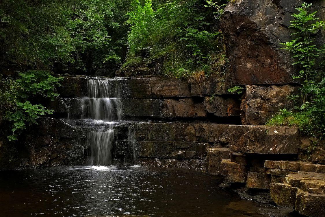 Фото бесплатно лес, деревья, водопад - на рабочий стол