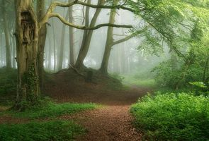 Фото бесплатно туман, деревья, путь