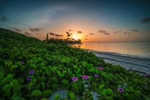 Фото бесплатно Florida, закат, море, берег, цветы, пейзаж