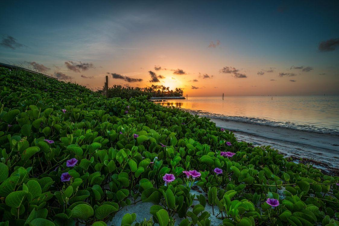 Фото бесплатно Florida, закат, море, берег, цветы, пейзаж, пейзажи