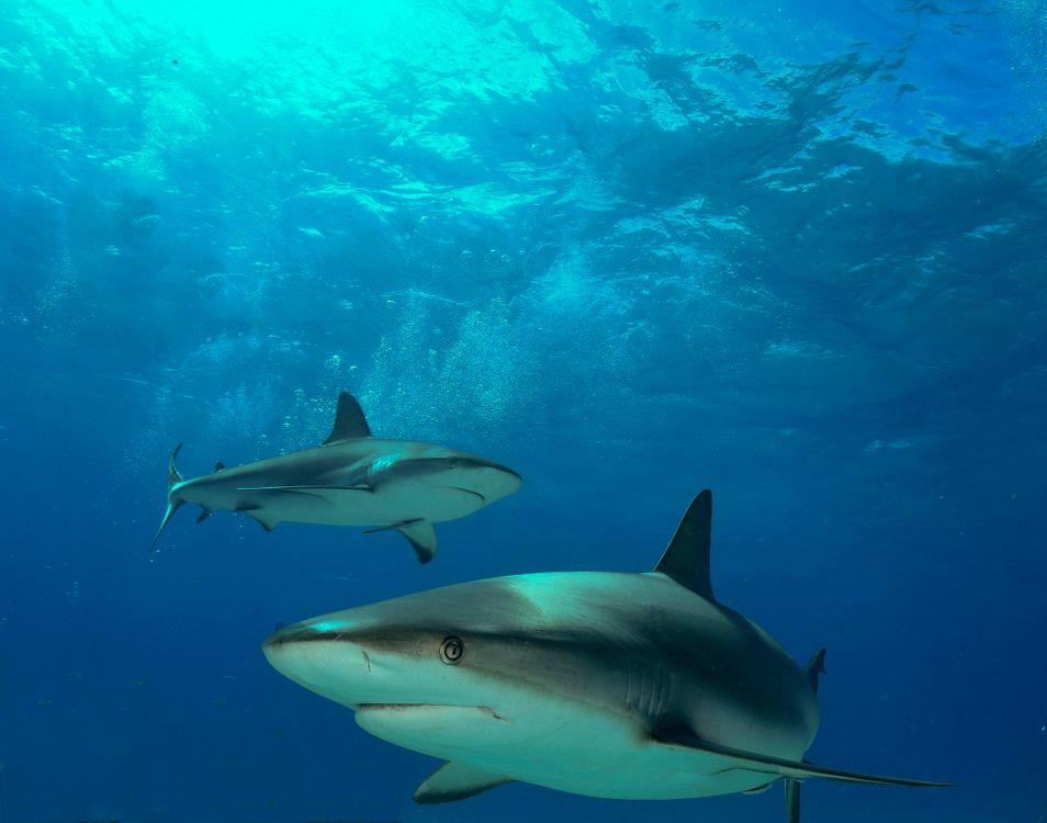 Фото бесплатно Морские обитатели, Акулы, Акула - на рабочий стол