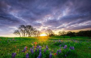 Бесплатные фото закат,поле,цветы,люпин,деревья,пейзаж