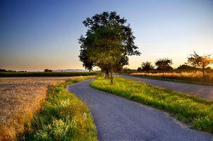 Фото бесплатно уши, закат, деревья