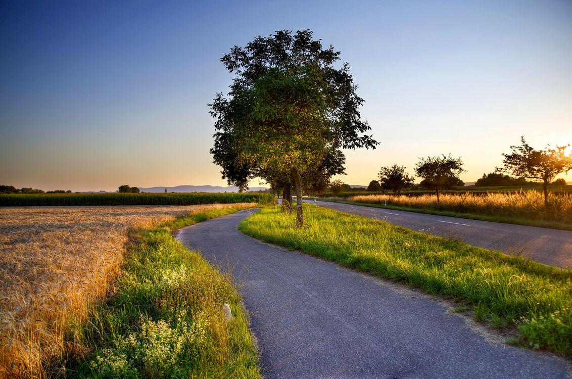 Картинка закат, поле, колосья, деревья, пейзаж на рабочий стол. Скачать фото обои пейзажи