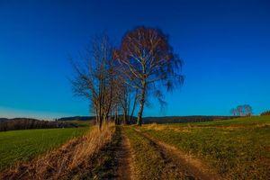 Фото поле, деревья больших размеров