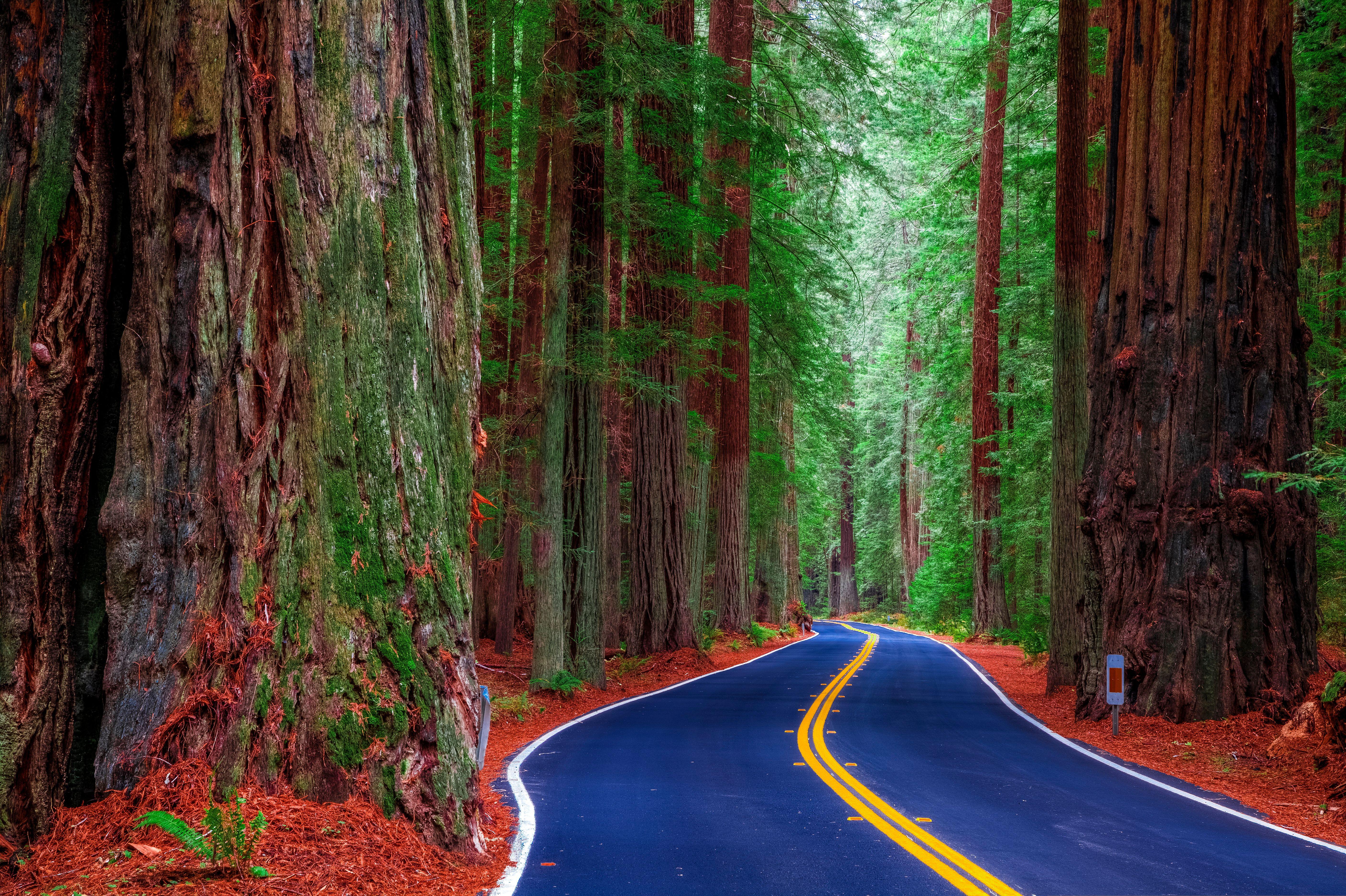 Обои Калифорния, США, лес, деревья