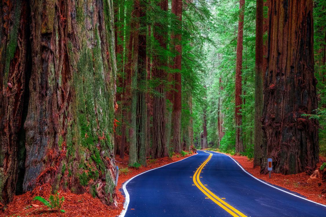 Фото бесплатно Калифорния, США, лес, деревья, дорога, пейзаж, пейзажи