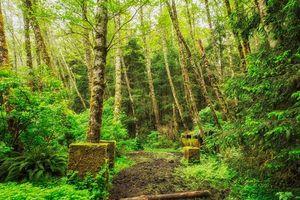 Бесплатные фото лес,деревья,тропинка,природа