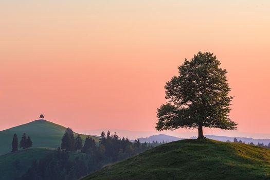 Фото бесплатно закат, холмы, деревья