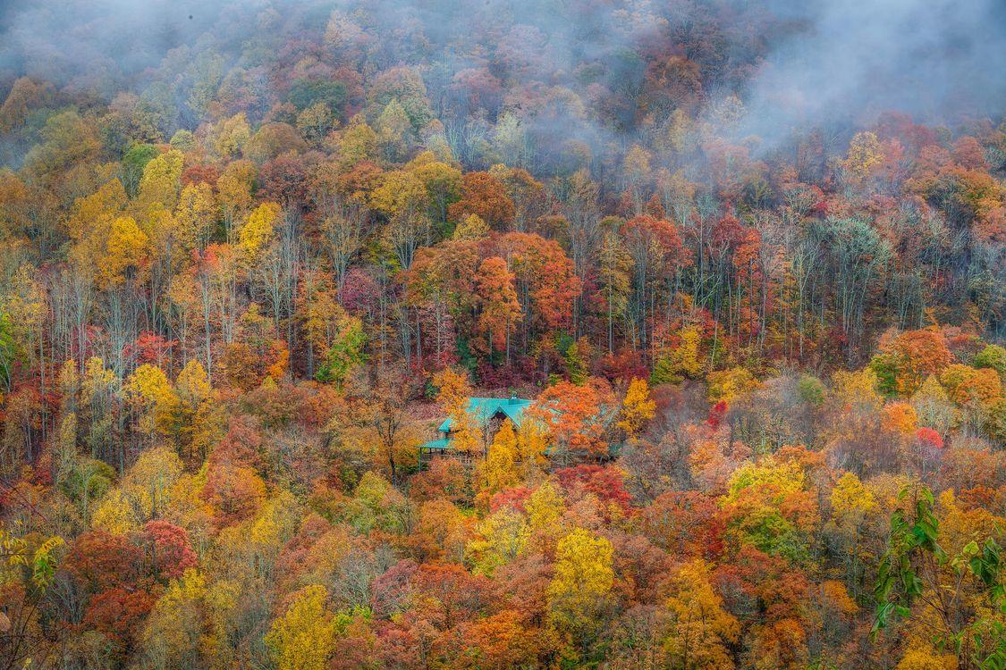 Фото бесплатно осень, лес, деревья, домик, пейзаж, пейзажи