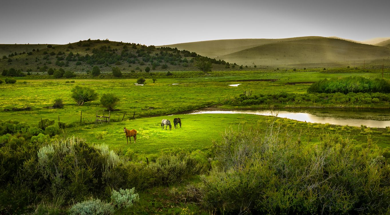 Фото бесплатно поля, лошади, река - на рабочий стол