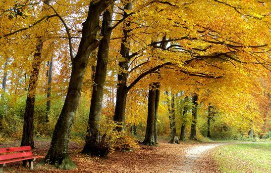 Фото бесплатно осень, парк, деревья, лес, дорога, лавочка, пейзаж
