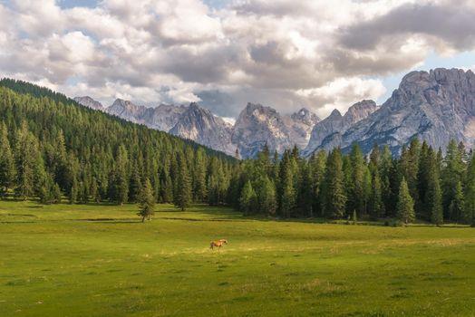 Фото бесплатно поле, пейзаж, лошадь