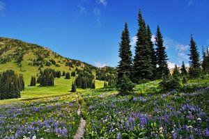 Бесплатные фото Полевые цветы вдоль Тихоокеанской тропы гребня,пустыня Пасайтен,поле,деревья,цветы,пейзаж
