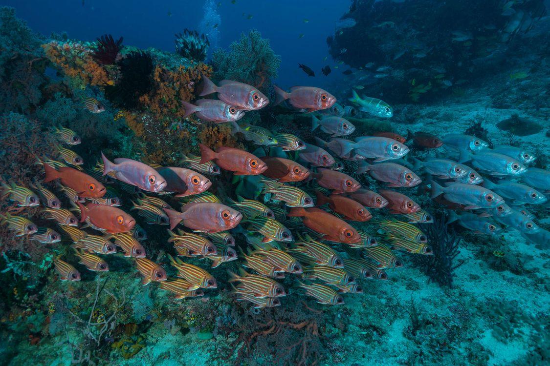 Обои рыба, подводный мир, морское дно картинки на телефон