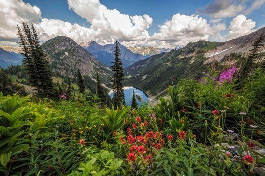 Фото бесплатно Скагит, Северные каскады, цветы