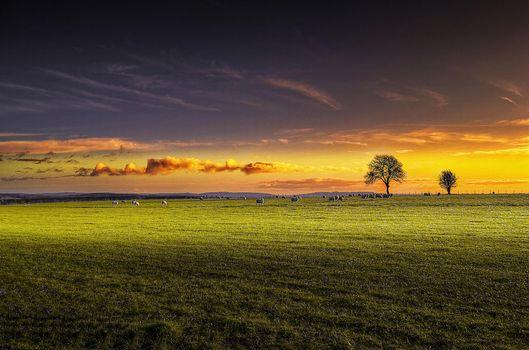 Photo free sunset, field, trees