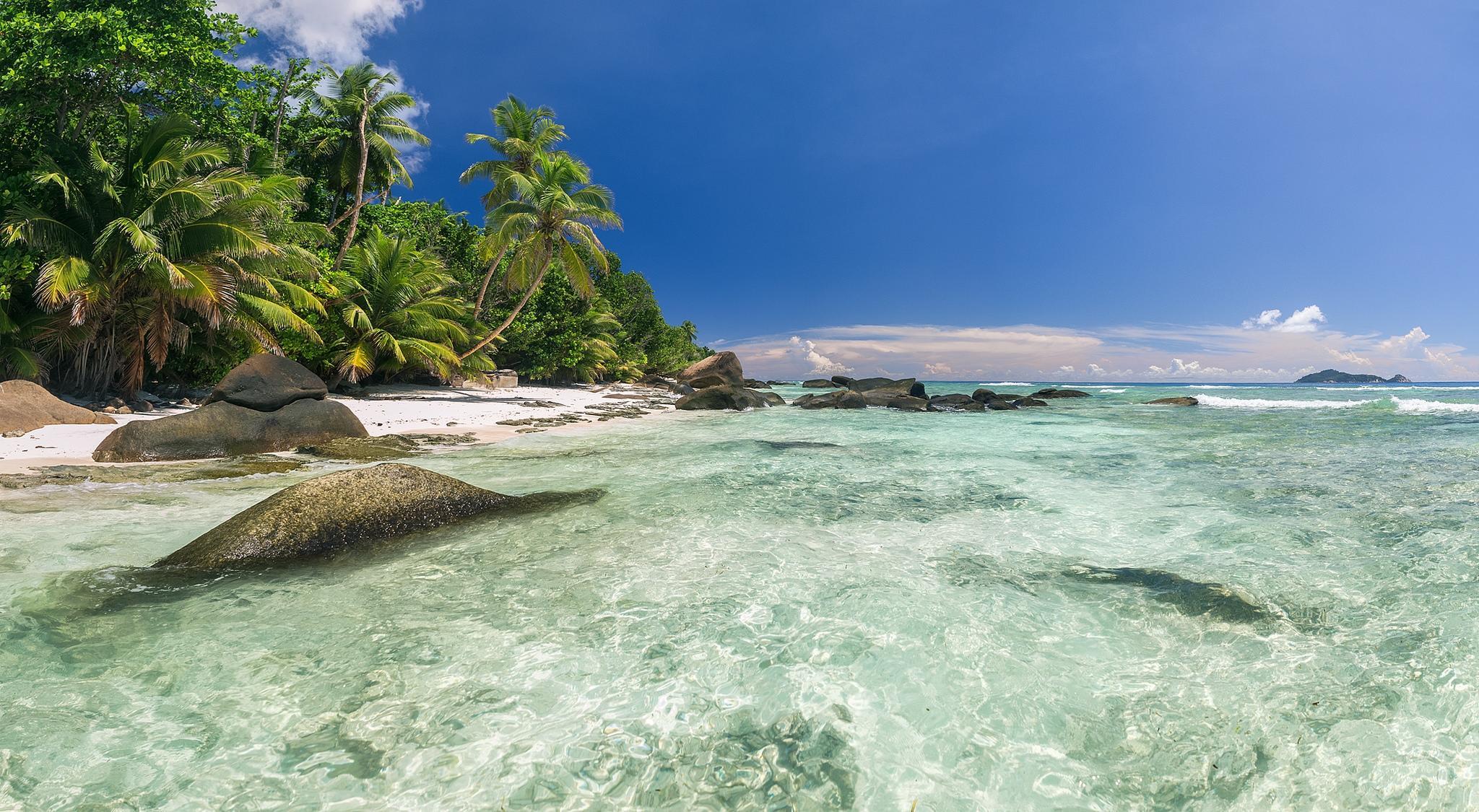 берег камни пальмы shore stones palm trees  № 792036 загрузить