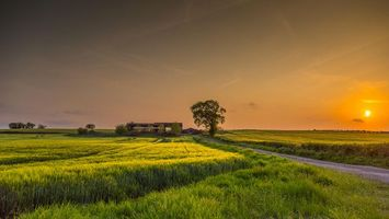 Бесплатные фото закат,поле,дорога,дерево,пейзаж