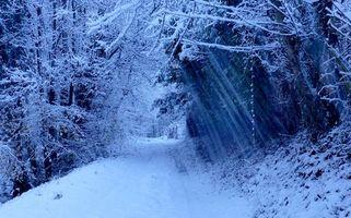 Заставки лес, деревья, дорога, зима, пейзаж