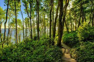 Бесплатные фото лес, деревья, тропинка, озеро, пейзаж