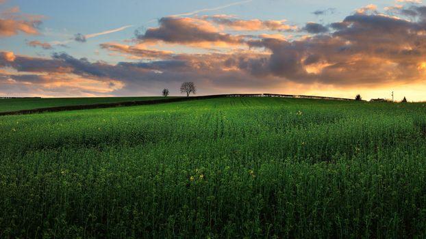 Заставки закат,поле,холм,деревья,пейзаж